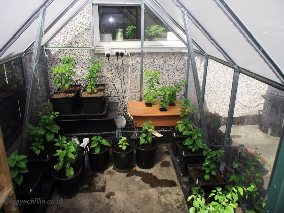 Hydro Greenhouse