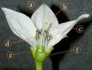 split_flower